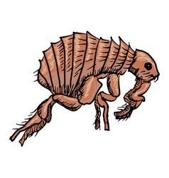 flea vector image vector image