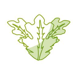Silhouette delicious leaves lettuce organ food vector