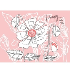 Poppy a sketch on a pink background vector