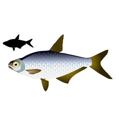 White eye fish vector