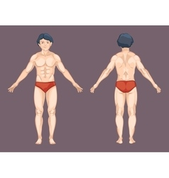Man body in front and back pose vector