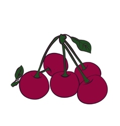 Cherry berry with leaves vector