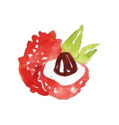 Juicy ripe lychee fruit watercolor hand painting vector