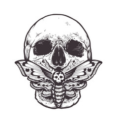 skull with moth vector image