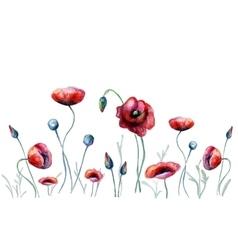 Watercolor poppy flowers vector image vector image