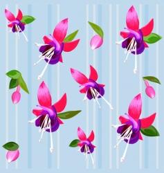 flower fuchsia vector image