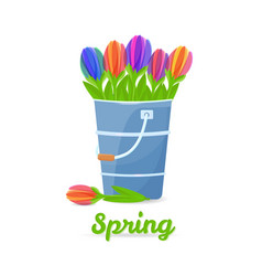 Colorfull tulips in the bucket vector