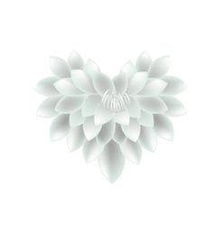 White dahlia flowers in a heart shape vector