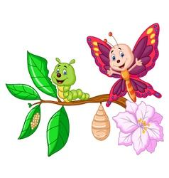 Butterfly metamorphosis cartoon vector image vector image