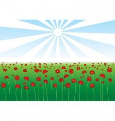 Field poppy vector