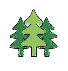 Natural pine trees to ecology reserve vector