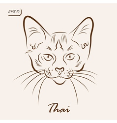 Thai cat vector