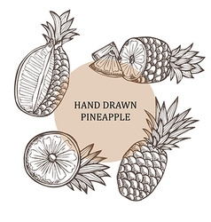 hand drawn pineapple fruits vector image