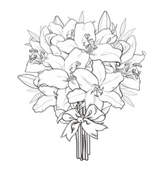 hand drawn tulip monochrome bouquet vector image vector image