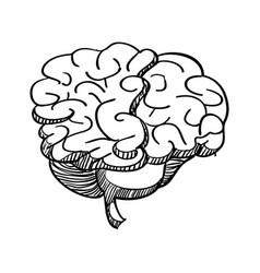 Human brain draw vector