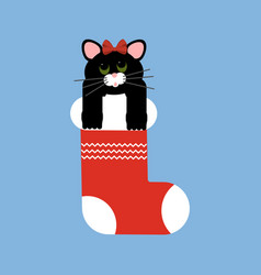 Cat in christmas stocking vector