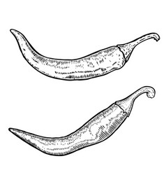 Chili peppers in engraving style design element vector