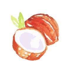 juicy ripe coconut fruit watercolor hand painting vector image