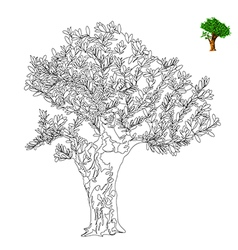 Oliva tree outline vector