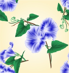 Seamless texture morning glory blue spring flower vector