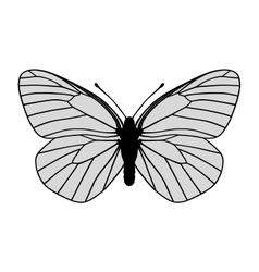 White butterfly vector image vector image
