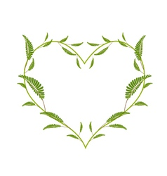 Green Leafy Leaves in A Heart Shape vector image