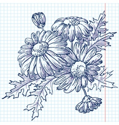 Bouquet of daisies chamomile vector