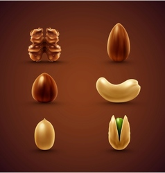 Set of nuts vector