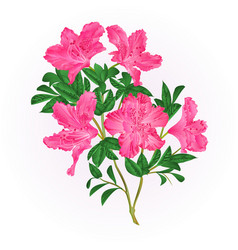 Pink flowers rhododendron twig with leaves vector