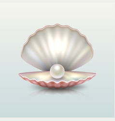 realistic beautiful natural open sea pearl vector image