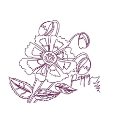 Poppy sketch white and claret vector