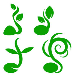 Phases plant growth little green sprout seedling vector