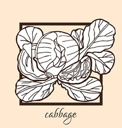 Hand drawn cabbage vector