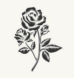 black hand drawn roses engraving vector image