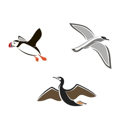 Isolated sea birds vector