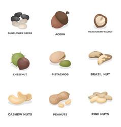 hazelnut pistachios walnut almondsdifferent vector image