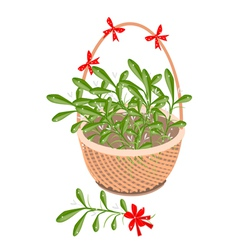 A brown basket of mistletoe with red bow vector