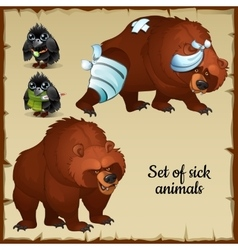 Sick and healthy bears and birds vector