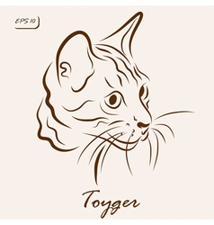 Toyger cat vector