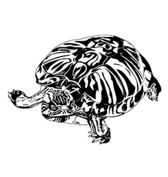 Turtle black and white vector