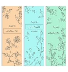 Floral flowering decorative flyer vector image vector image