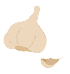 Garlic clove vector image