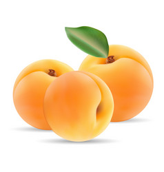 group of ripe apricot with leaves isolated on a vector image