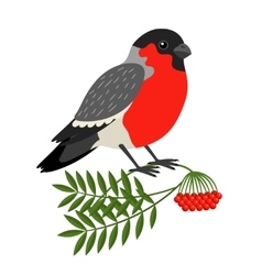 Bullfinch christmas bird vector