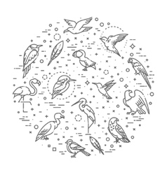 Set of different birds vector image vector image