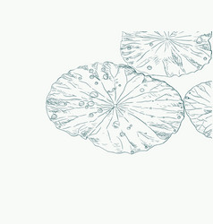 water drops on lotus leaf sketch vector image vector image