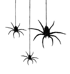 Three spiders vector