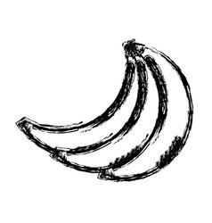 Contour babanas fruit icon stock vector