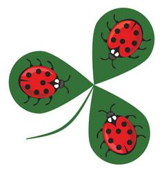 shamrock wiht three ladybugs three little red vector image