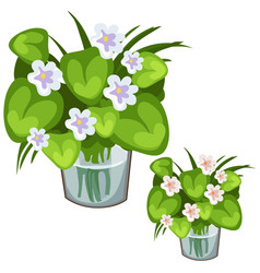 White flowers with green leaves in glass vase vector